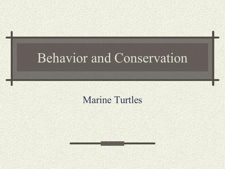 Behavior and Conservation Marine Turtles. Reproduction Mate in the water Appear to rely on visual cues for species and sex recognition Oviparous.