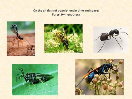 On the analysis of populations in time and space: Forest Hymenoptera.