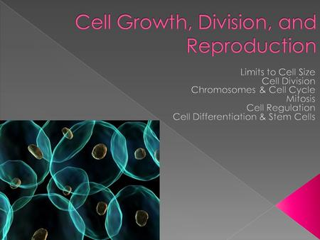  The larger a cell becomes, the more demands it places on its DNA & the less efficient it is at moving nutrients/wastes  Enough DNA = abundant cell.