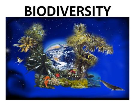 BIODIVERSITY. ECOLOGY: The study of interactions among living and nonliving things ABIOTIC FACTORS – Non-living factors – Soil, temp., precipitation BIOTIC.