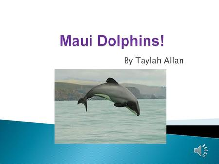 By Taylah Allan  Maui's dolphin is the world's rarest and smallest dolphin.  Maui's dolphin are cousins to Hector's dolphin.  They are different to.