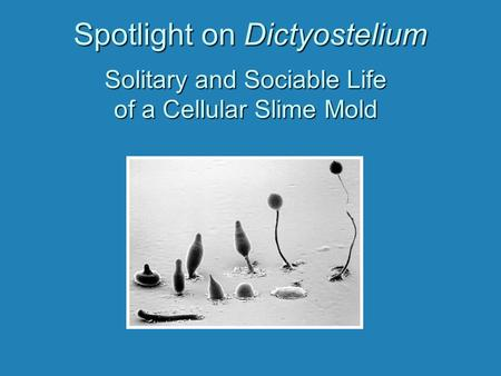 Spotlight on Dictyostelium Solitary and Sociable Life of a Cellular Slime Mold.