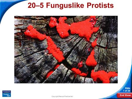 End Show Slide 1 of 34 Copyright Pearson Prentice Hall 20–5 Funguslike Protists.