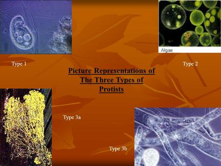 Type 1Type 2 Type 3a Type 3b Picture Representations of The Three Types of Protists.