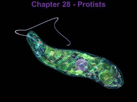Chapter 28 - Protists. Important vocabulary pitfall.
