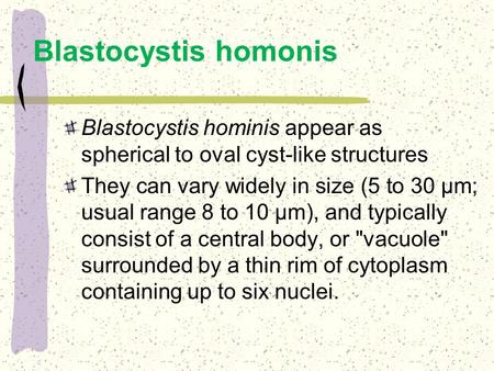 Blastocystis hominis appear as spherical to oval cyst-like structures They can vary widely in size (5 to 30 µm; usual range 8 to 10 µm), and typically.