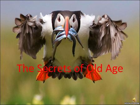 The Secrets of Old Age. Before middle age – Do not fear!
