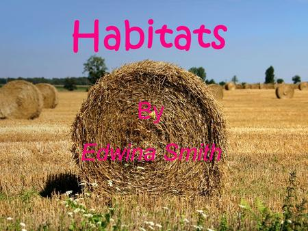 Habitats By : Edwina Smith What is a habitat? A habitat is the place where living things live. A habitat is the place where living things live. It is.