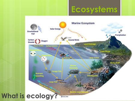 Ecosystems What is ecology?. Habitats An organism obtains food, water, shelter, and other things it needs to live, grow, and reproduce from its environment.