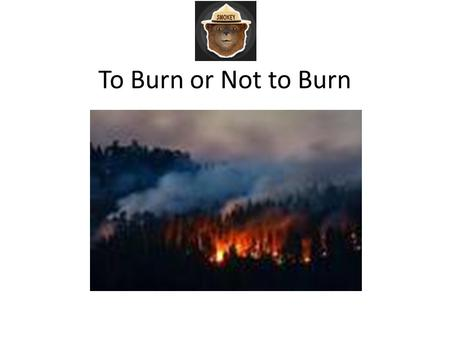 To Burn or Not to Burn. Wildfire Wildfire is the term applied to any unwanted, unplanned, damaging fire burning in forest, shrub or grass and is one.