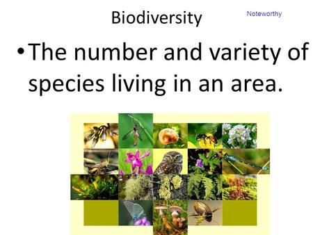 Biodiversity The number and variety of species living in an area. Noteworthy.