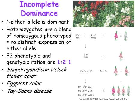 Incomplete Dominance Neither allele is dominant Heterozygotes are a blend of homozygous phenotypes = no distinct expression of either allele F2 phenotypic.