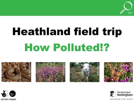 Heathland field trip How Polluted!? © Amy Rogers © Carl Corbidge.