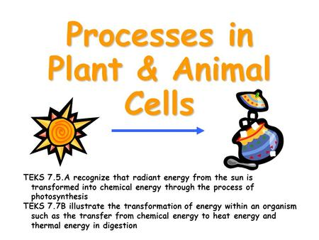 Processes in Plant & Animal Cells TEKS 7.5.A recognize that radiant energy from the sun is transformed into chemical energy through the process of photosynthesis.