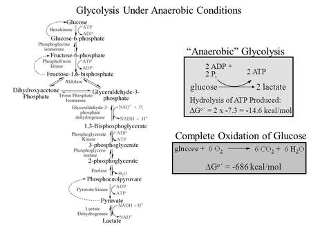 Glycolysis Under Anaerobic Conditions
