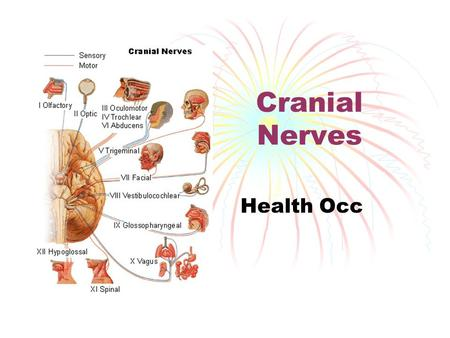 Cranial Nerves Health Occ.