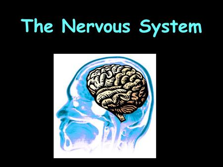 The Nervous System. What is its FUNCTION? Receives information about what's happening inside and outside the body. Directs the way your body responds.