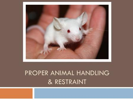 PROPER ANIMAL HANDLING & RESTRAINT. Why Proper Restraint Techniques?  Prevents injury  Useful for examinations and treatments  More comfortable for.