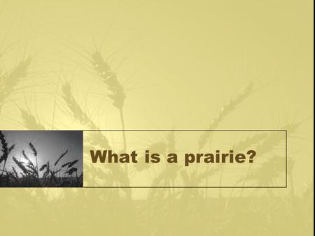 What is a prairie?. Definition of a Prairie Large communities covered with grasses and similar small plants Occur in climates with a dry season Contains.