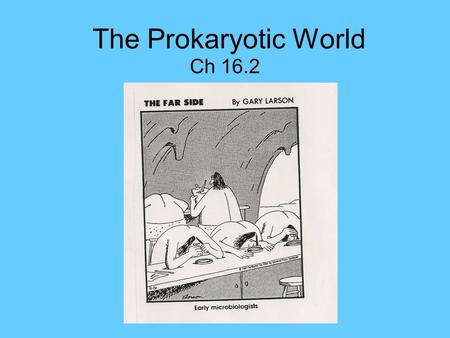 The Prokaryotic World Ch 16.2. Prokaryotes Prokaryote: a cell that lacks a nucleus and other organelles 2 types of prokaryotes: 1. Archaea 2. Bacteria.