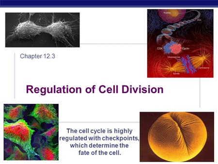 AP Biology 2008-2009 Regulation of Cell Division Chapter 12.3 The cell cycle is highly regulated with checkpoints, which determine the fate of the cell.