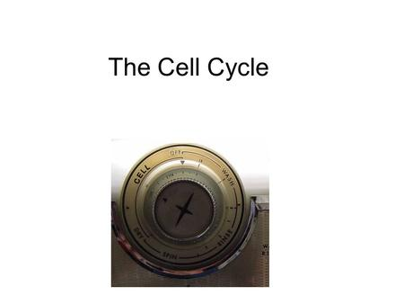 The Cell Cycle. Overview of Cell Cycle Events Mutants that Arrest the Cell Cycle.