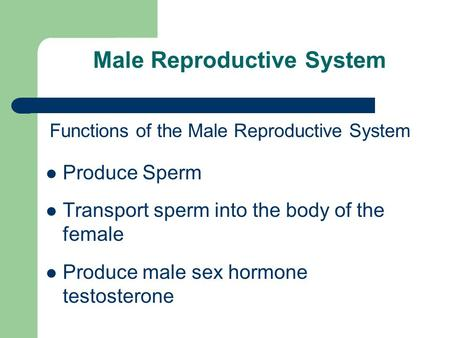 Male Reproductive System Functions of the Male Reproductive System Produce Sperm Transport sperm into the body of the female Produce male sex hormone testosterone.