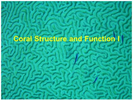 Coral Structure and Function I. Maritime coastal - greenish - particulate Caribbean - blue - clear.