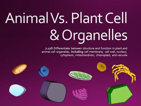 Animal Vs. Plant Cell & Organelles