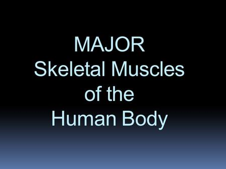 MAJOR Skeletal Muscles of the Human Body. FRONTALIS.