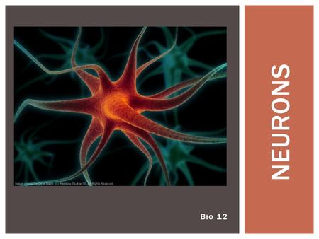 Bio 12 NEURONS. Joke of the day: Wouldn't that be great!