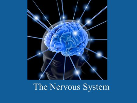 The Nervous System.  iction/drugs/mouse.html.