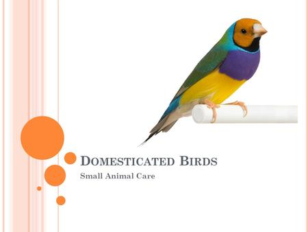 Domesticated Birds Small Animal Care.