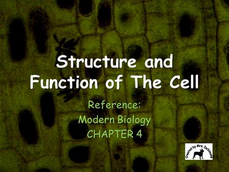 "an outline of the cell theory ""all cells come from cells"" principles of cell theory all living things are made of  cells smallest living unit of structure and function of all organisms is the cell."
