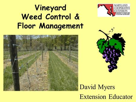 Vineyard Weed Control & Floor Management