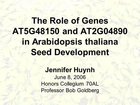 The Role of Genes AT5G48150 and AT2G04890 in Arabidopsis thaliana Seed Development Jennifer Huynh June 8, 2006 Honors Collegium 70AL Professor Bob Goldberg.