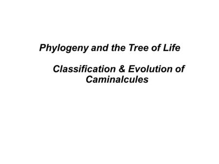 Phylogeny and the Tree of Life Classification & Evolution of Caminalcules.