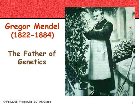 © Fall 2005, Pflugerville ISD, 7th Grade copyright cmassengale 1 Gregor Mendel (1822-1884) The Father of Genetics.