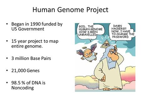 Human Genome Project Began in 1990 funded by US Government 15 year project to map entire genome. 3 million Base Pairs 21,000 Genes 98.5 % of DNA is Noncoding.