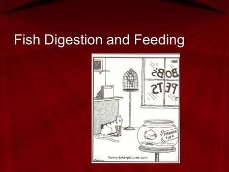 Fish Digestion and Feeding. Next Generation Science / Common Core Standards Addressed HS ‐ LS2 ‐ 6.Evaluate the claims, evidence, and reasoning that the.