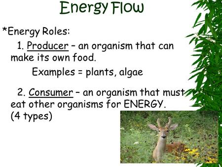 Energy Flow *Energy Roles: 1. Producer – an organism that can make its own food. Examples = plants, algae 2. Consumer – an organism that must eat other.