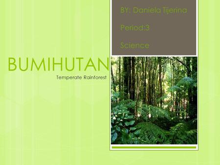 BY: Daniela Tijerina Period:3 Science BUMIHUTAN Temperate Rainforest.