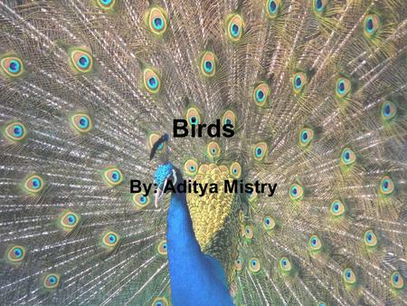Birds By: Aditya Mistry Origin Scientists theorize that birds originated from dinosaurs. Archaeopteryx: first fossilized birdlike dinosaur found Had.