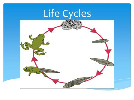 Life Cycles. The different stages an animal or plant goes through during its life. In plants this includes:  Pollination  Fertilisation  Fruit development.