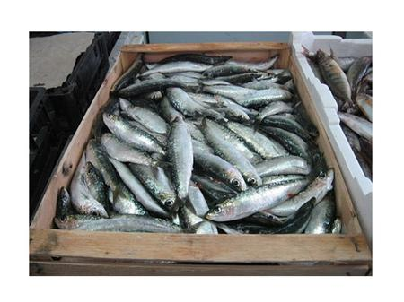 Oily Fish Examples of oily fish include salmon, trout, mackerel, herring, sardines and anchovies. These types of fish have oil in their tissues and around.