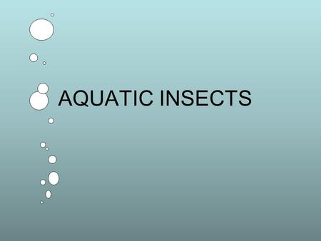 AQUATIC INSECTS. I. Phylum Arthropoda A. Major characteristics 1. Jointed appendages and…