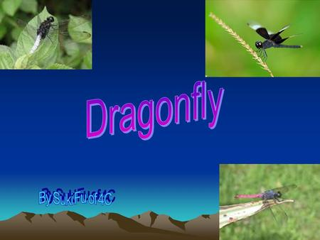 Contents Contents Dragonflies' life1 Dragonflies' picture2 What do dragonflies eat3 Dragonflies' structure4 Dragonflies' picture5 Where do dragonflies.