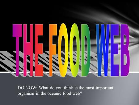 THE FOOD WEB DO NOW: What do you think is the most important