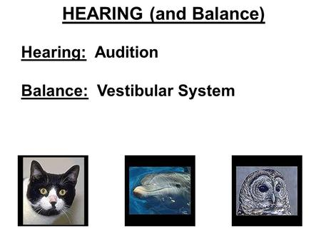 HEARING (and Balance) Hearing: Audition Balance: Vestibular System.
