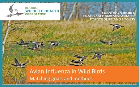 Day CREATING A WORLD THAT IS SAFE AND SUSTAINABLE FOR WILDLIFE AND SOCIETY Avian Influenza in Wild Birds Matching goals and methods.